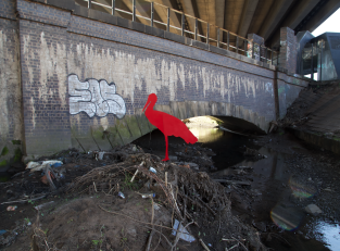 Gavin Rogers Stork Red Migrant Stork